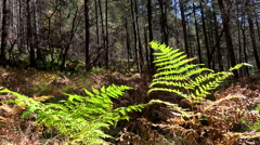 4K Bright Green Fern Forest Trees Scenic Background Stock Footage