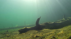 Sunlight gleaming over submerged trees - stock footage