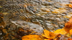 Dry,yellow autumn leaves flowing on stream water Stock Footage