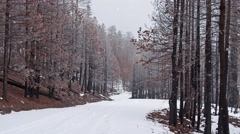 Winter Scene - Snowy Road through Woods with Seamlessly Looping Snowfall Stock Footage