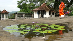 Monk passing by a pond with lotus flowers with reflection in the water Stock Footage