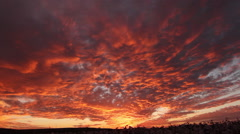 Magnificent Cotton Field Sunset Time Lapse Stock Footage