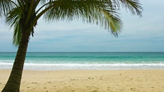 View of uninhabited sandy beach with palm tree Stock Footage