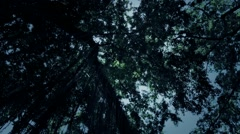 Twilight jungle trees overhead rotation with light reflection - stock footage