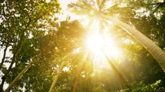 Sun rays through the tropical trees and palms Stock Footage