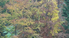 Many colors in the forest in autumn landscape. Autumn beginning. Stock Footage