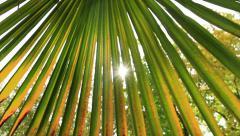 Sunbeam between Palm Autumn Leaves Stock Footage