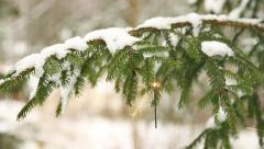 sparkler hanging in christmas tree (rack focus) - stock footage