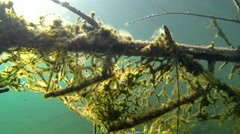 Old fishing nets stuck on a submerged tree Stock Footage