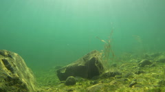 Underwater landscape with gleaming sunrays - stock footage