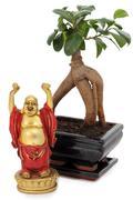 bonsai and buddha - stock photo