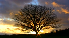 Big, old, leafless oak tree with a setting sun against a rough autumnal sky Stock Footage