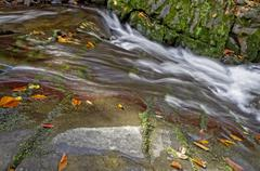 Luxuriant mountain stream with leaves. - stock photo