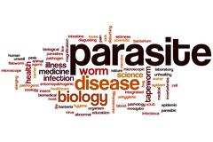 Parasite word cloud Stock Illustration