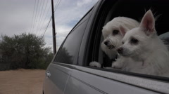 4K Dogs Patiently Wait In Car For Owner Stock Footage