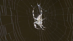 Spider catches a fly Stock Footage
