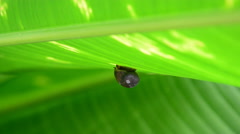Baby snail. Stock Footage