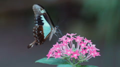 Butterfly dancing with flower in slow motion Stock Footage