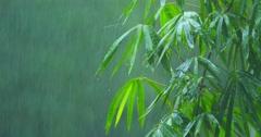 Bamboo tree under tropical rain fall during monsoon rainy season Stock Footage