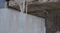 Icicle Low Temperature Cold Weather Freezing Season Ice Frozen Water House Roof Stock Footage