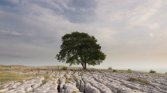 Yorkshire dales ash tree Stock Footage