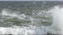 Seaguls under the sea HD Stock Footage