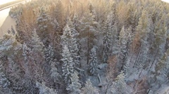 Magical winter forest - stock footage