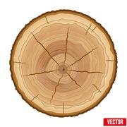 Annual tree growth rings of the cross-section wood trunk Piirros