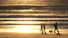 Happy Dogs with Friends at Sunset Beach Stock Footage