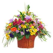 flower bouquet arrangement centerpiece in basket isolated on white background - stock photo