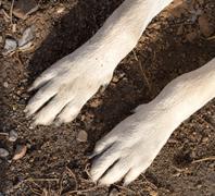 dog paws - stock photo