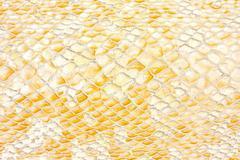 Reptile texture Stock Photos