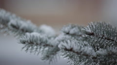 Snow on Christmas Tree Branches, Derbyshire, England, Uk, Europe Stock Footage