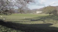 Sheep in Chatsworth Park, Chatsworth House, Derbyshire, England, Uk, Europe Stock Footage