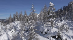Aerial - Around the spruce tree. Snow falling down from branches Stock Footage