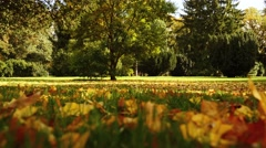 autumn fall nature background. forest trees woods scenery. sunbeam light - stock footage