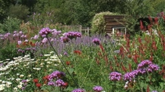 Flower garden with wooden shed, pan pink, purple, scarlet colors Stock Footage