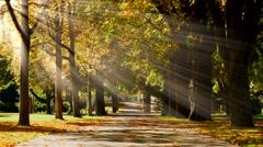 park tree alley pathway. autumn fall season background. sunbeam light effect - stock footage