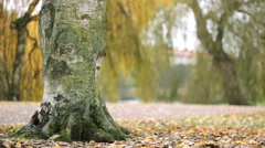 Autumn fall Nature Landscape.people walking in  tree  Leaves in PArk - stock footage