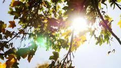 Wind breeze moving tree branches around. autumn fall season background Stock Footage