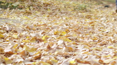 Close up of a woman wearing high heeled boots walking through leaves in a park Stock Footage