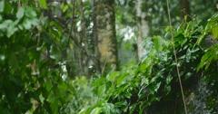 Tropical rainforest at rainy monsoon season - stock footage