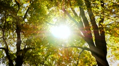 Sun shining through branches of tree. autumn nature background. fall season Arkistovideo
