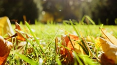 Autumn fall nature background. leaves lying in grass field Stock Footage