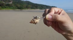 Hermit crab hand.mp4 Stock Footage