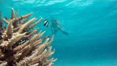 Girl swimming near coral in Red Sea Stock Footage