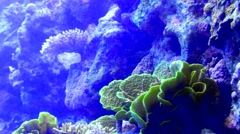 Lively underwater coral  reef colony scene - super time lapse Stock Footage