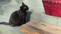 Black cat shaking his head Stock Footage