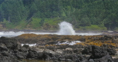 Coastal Oregon Seascape Stock Footage