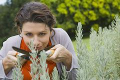 Woman trimming plants Stock Photos